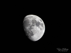 First attempt with my new 70-200 f2.8 lens.